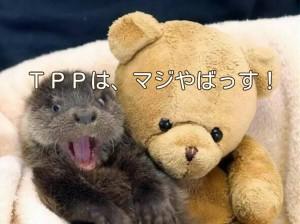 TPPのステートメント読みました?未来変わりますよ!